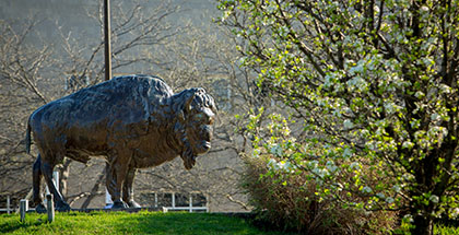 Bronze Bison on North Campus.